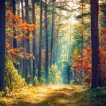 Prvky koučinku v péči o sebe – naše zdroje
