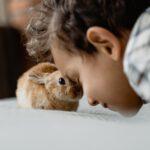 Animoterapie aneb jak nás mohou léčit zvířata
